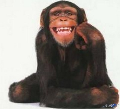 العلماء يثبتون ادمان القردة على تناول الكحول