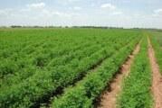 معرض للتقانات الزراعية الحديثة الأحد بالقضارف