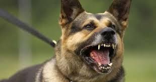 """الكلاب البوليسية ستشم """"رائحة الموت"""""""