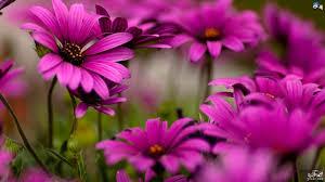 تدشين المعرض البيئي الأول للزهور بالحديقة النباتية بالخرطوم