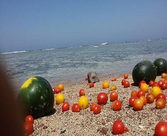 """بالصور.. مياه البحر الأحمر تُلقي بـ""""بطيخ وبرتقال وطماطم"""""""