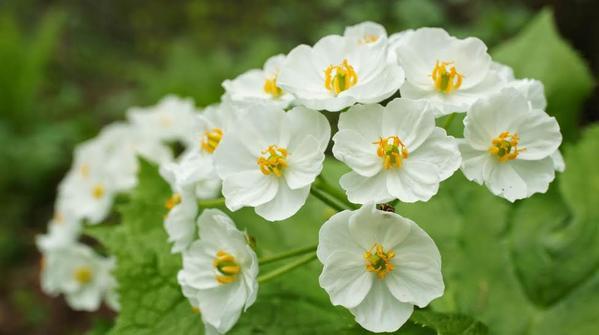 شاهد بالصور .. زهور بيضاء تتحوّل إلى شفافة عندما يلمسها الماء