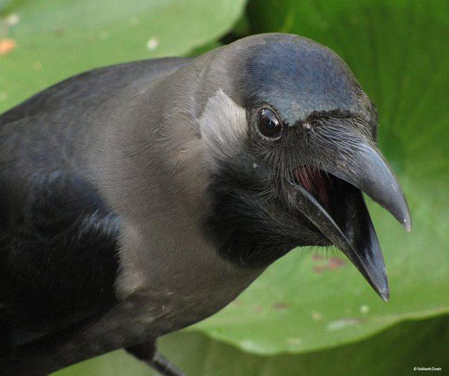 صور.. تعرف على السر وراء التفاف الغربان حول موتاها