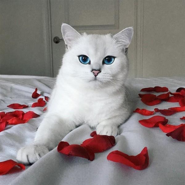 قطة تمتلك أجمل عيون في العالم