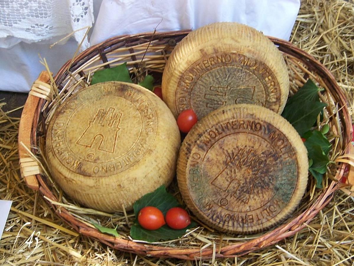 Il Canestrato di Moliterno I.G.P., il formaggio simbolo della Basilicata