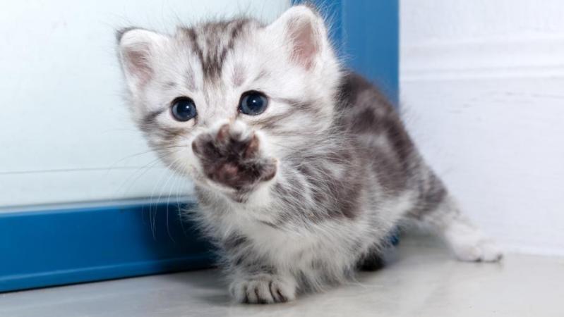Atteint d'autisme, un jeune homme fait vivre un calvaire à des chats et poste les vidéos sur les réseaux sociaux: «Une personnalité fragile»