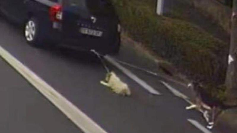 Photo glaçante dans les Ardennes: deux chiens traînés par une voiture sur près d'un kilomètre, «les bêtes étaient en sang»