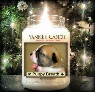 Puppy Breath candle