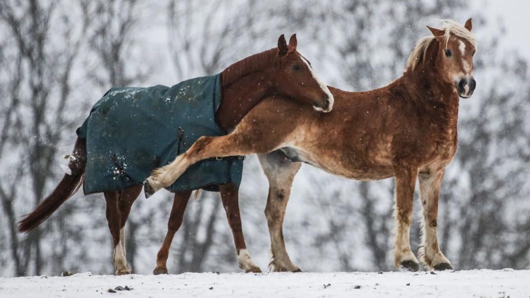 Lustige Spruche Rund Ums Thema Pferd Und Reiter Youtube
