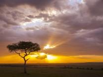 Bestsellerautor Jonas Jonasson: Ein reines Herz fällt vom Himmel