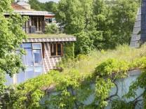 Ökologie: Das Schwammviertel