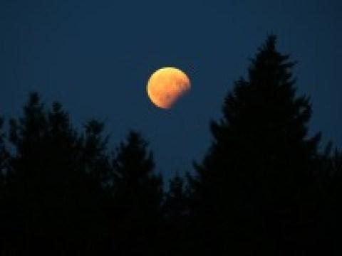Biologie: Nachtschicht im Wald