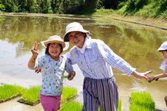 農薬を使わず、有機堆肥で育てる米作り