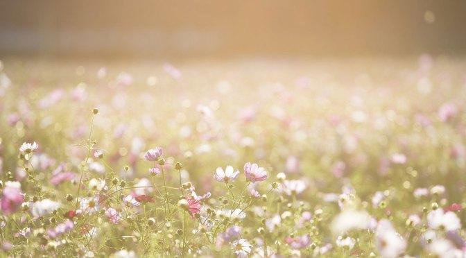 Suffolk Gardener