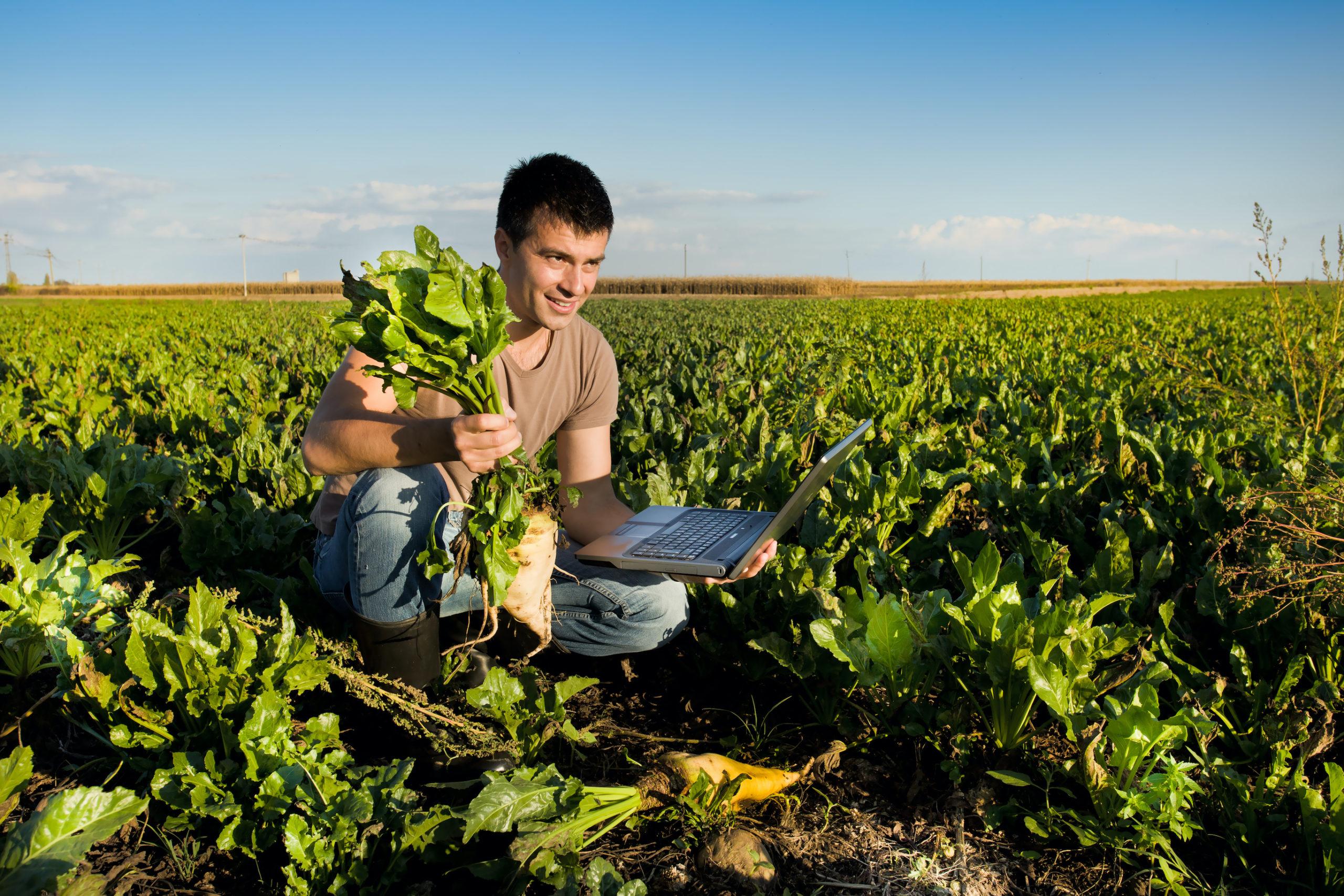Farmer in sugar beet field