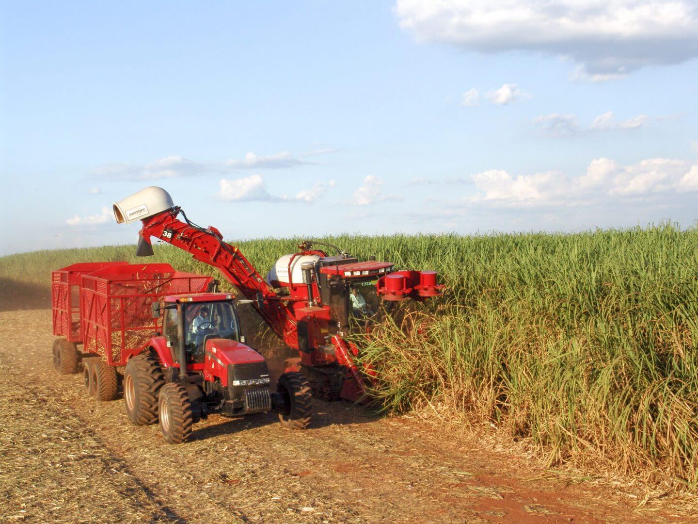 sugar harvesting in brazil