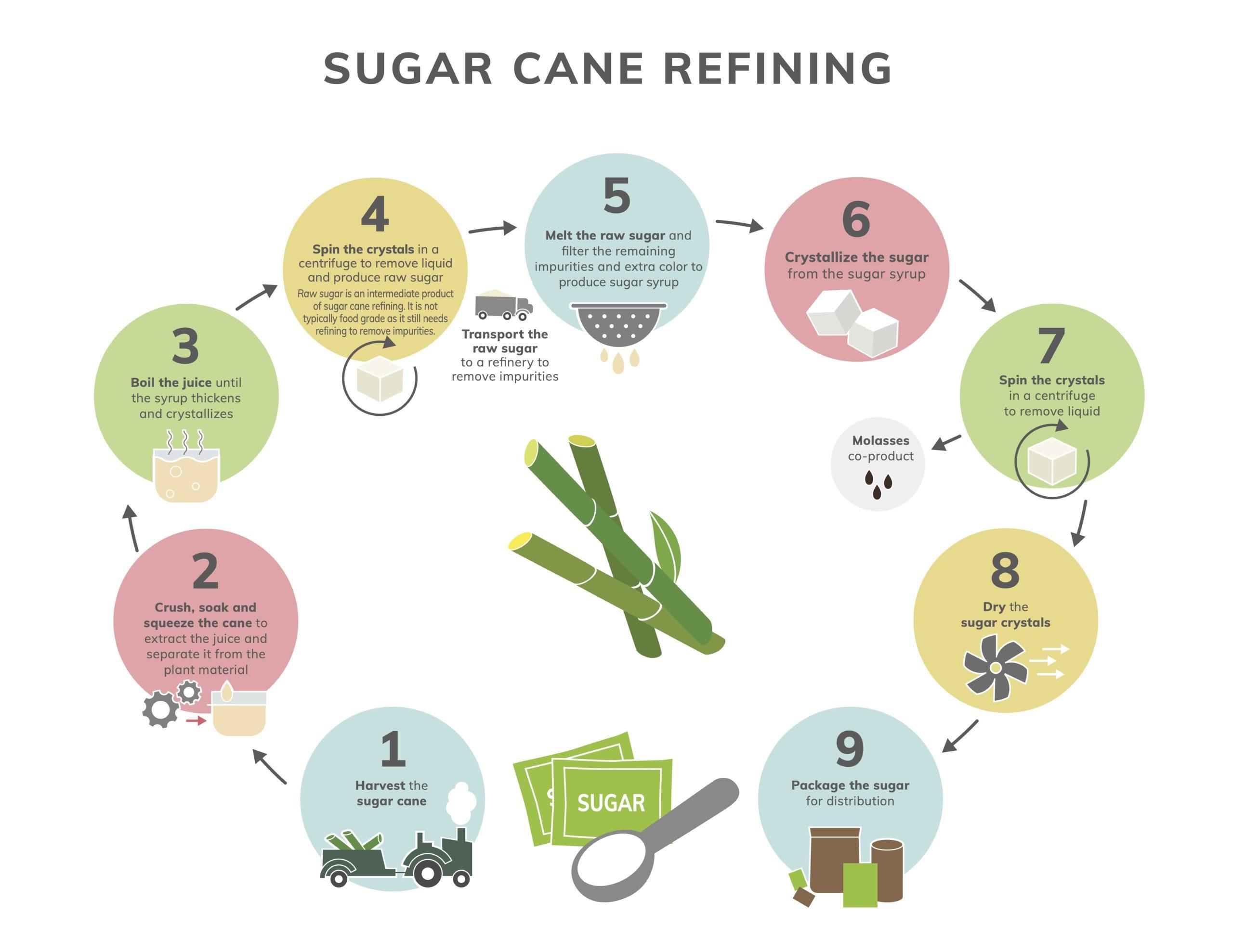 Sugar Cane Refining Infograph