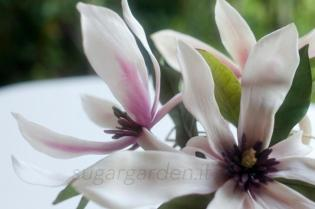 Magnolias_1