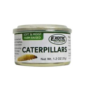 iNSECTOS DESHIDRATADOS INSECTOS ENLATADOS COCINADOS PARA PETAURO PETAUROS DEL AZUCAR orugas caterpillars