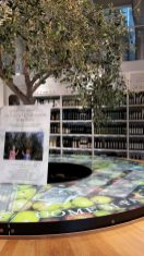 Olive tree and olive oils