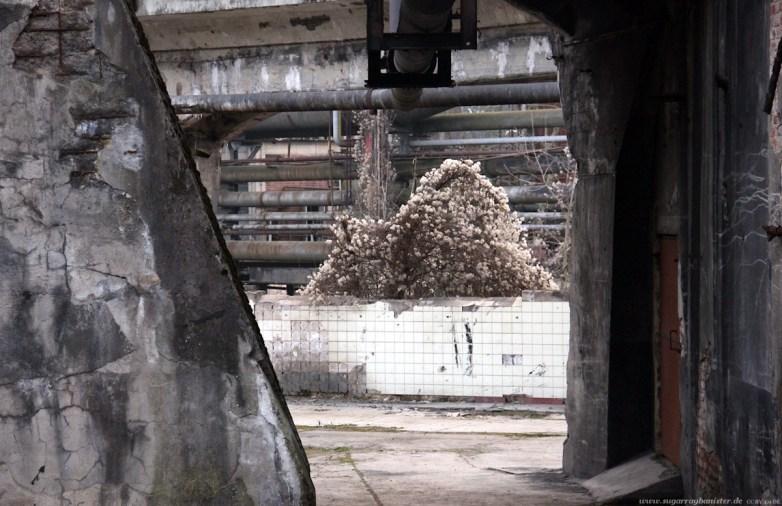 Urban Art Biennale 2013 - 28 - SugarRayBanister