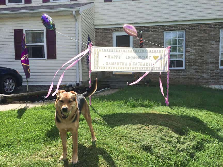 "Zach's dog Penny in front of a ""Congratulations!"" sign his sister made"