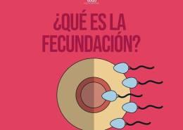 ciclo menstrual Ciclo menstrual y sexualidad fecundacion  Ginecología fecundacion
