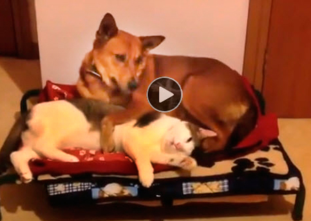 funny-video-of-cats-stealing-dogs-beds-funny-video-for-kids