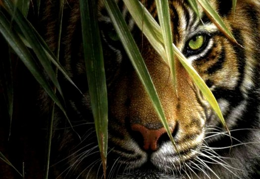 Tiger-Hiding-Desktop-Wallpaper