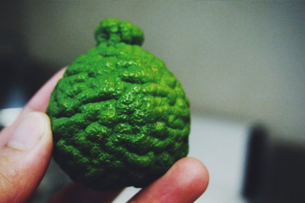 A Kaffir Lime - Suitcase Foodist