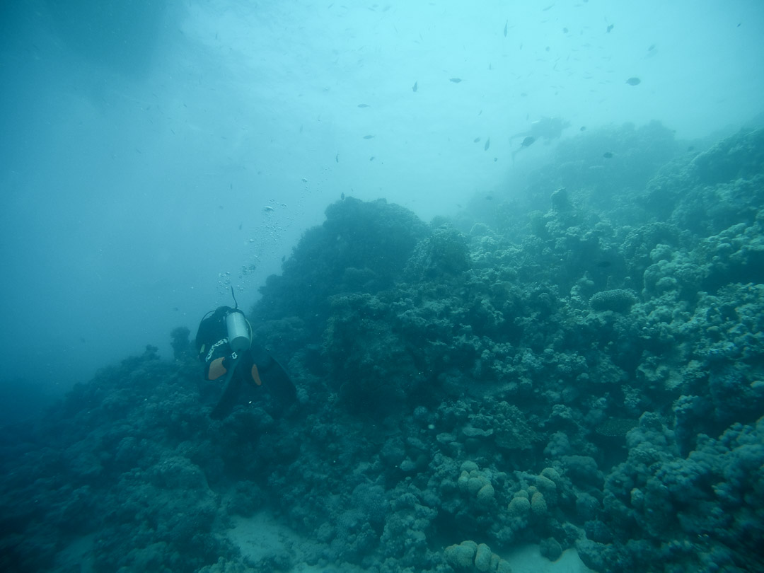 diving Red Sea; 6 amazing things to do in Hurghada