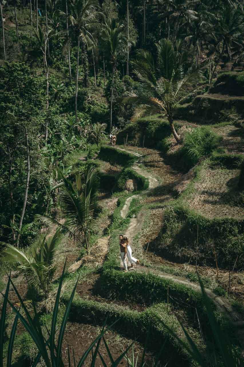 Ubud Tegalalang Ricefields