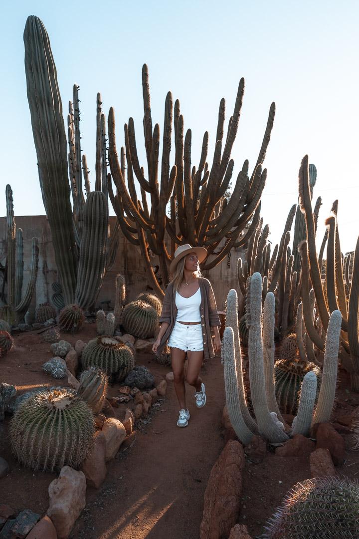 Cactus garden in Carnarvon