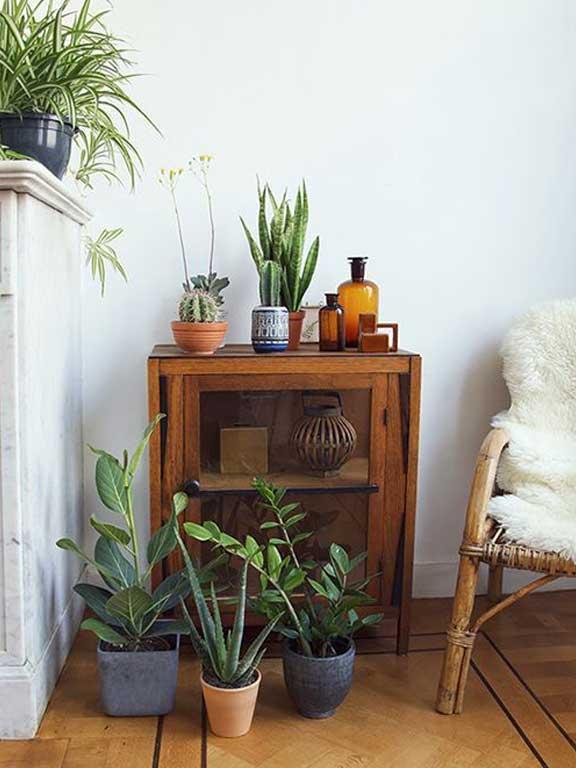 Antiques, plants and vignette with a hipster flare