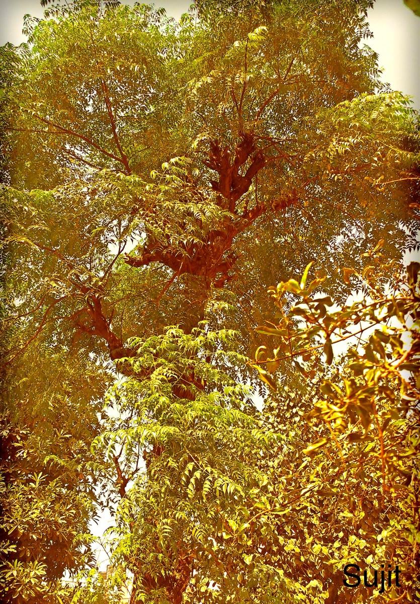 एक पेड़ - Life of a Tree