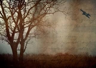migratory birds poem