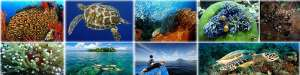Sulawesi Diving Photo Collection