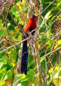 Tangkoko Bird