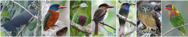 Sulawesi Bird Watching