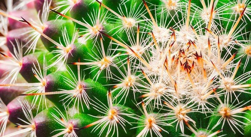 Cactus-1807