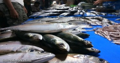 Ikan yang Dijual di Kendari.