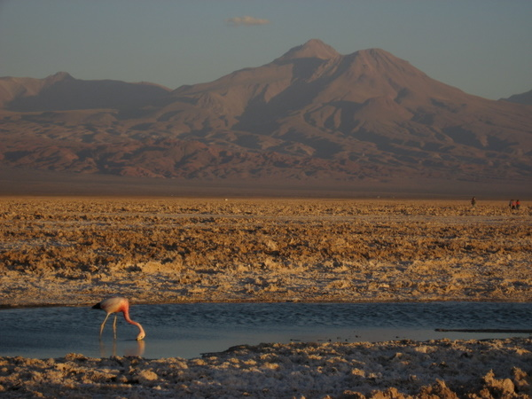 Panoramic view from Chaxa Lagoon, in the Atacama Salt Flat