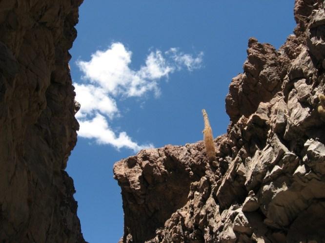 Cacti Ravine