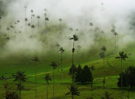 Valle del Cocora in the Coffee Region, Colombia