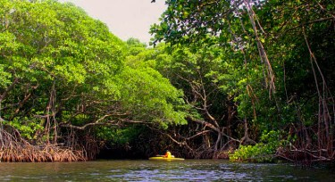 Kayaking in the breath-taking mangroves of Los Tuxtlas, Veracruz state, Mexico