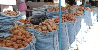 Local farmers show off their different varieties of potato