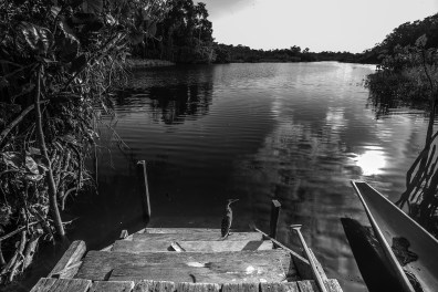 The rustic pier of the Sani Lodge in the Amazon, Ecuador