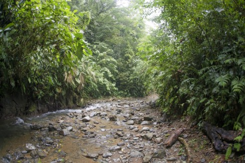 Walking along a creek next to a lush forest in Utria National Park in Bahia Solano, Colombia