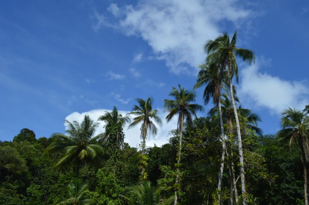Beautiful palm trees in Nuqui, Colombia