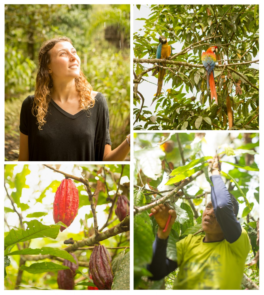 Scenes from the chocolate plantations in the jungle in the Ecuadorian Amazon